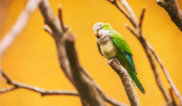 27-parrot