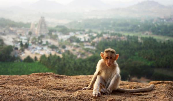 29-monkey