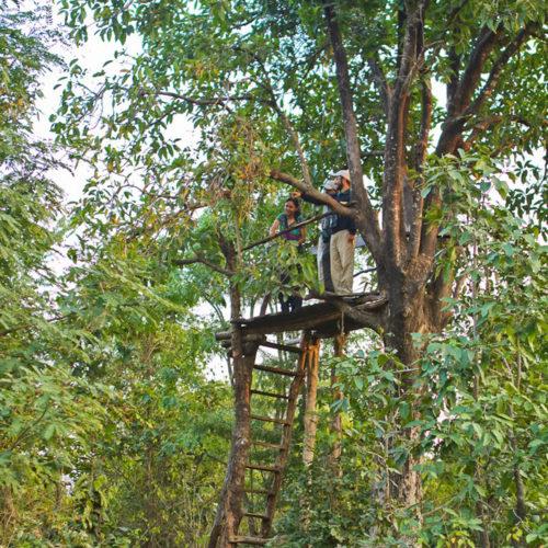 forsyth-lodge-treehouse