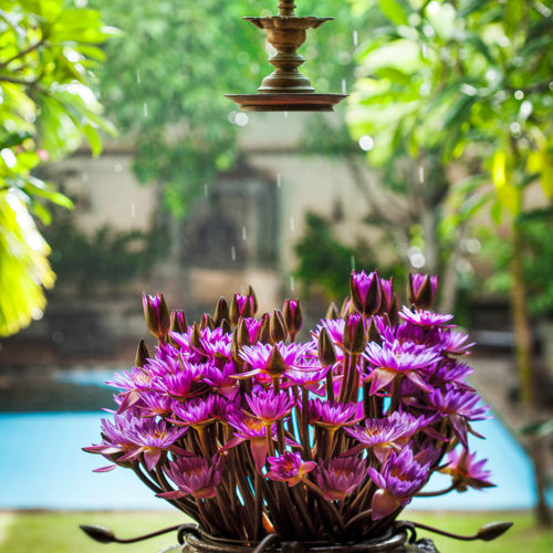 Galle Fort Hotel flowers