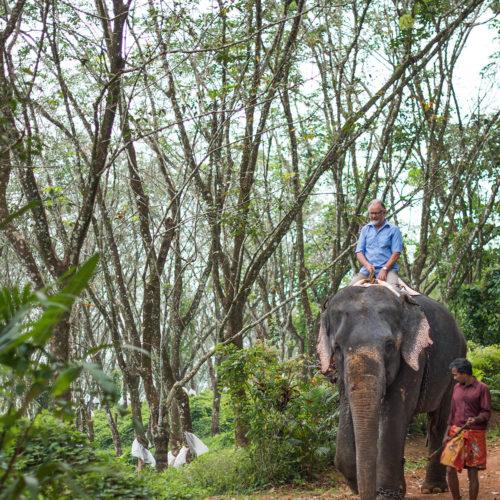 greaves_serenity_kerala_elephant
