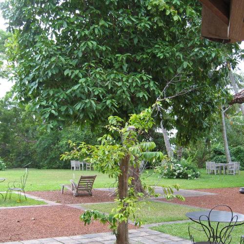 greaves_the_dutch_house_garden