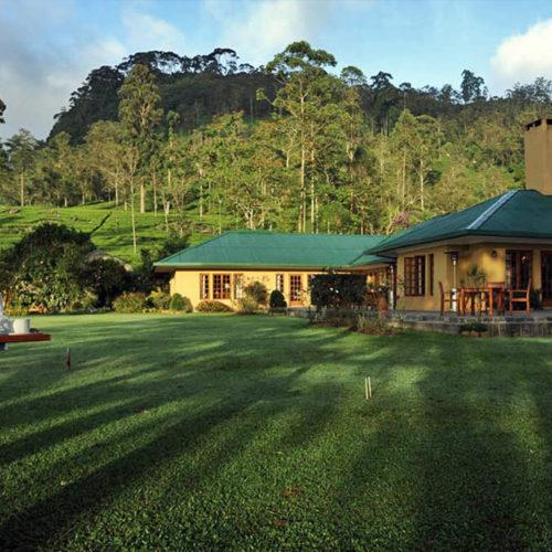 Tea Bungalow lawn