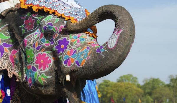 Beautifully painted Indian Elephant
