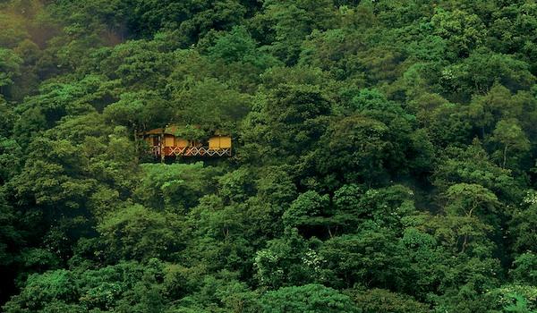 vythiri_tree_house_-_tree_plantation