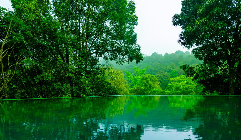 Indian Wellness | Wayanad Wild