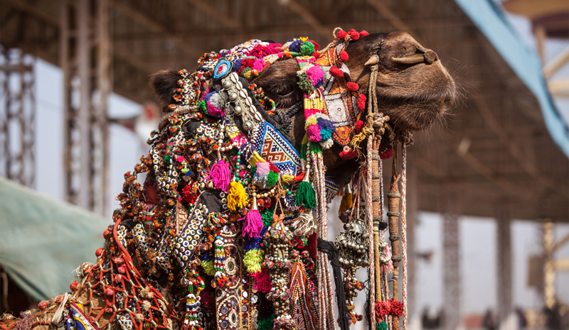 Indian Festivals | Pushkar Camel Fair