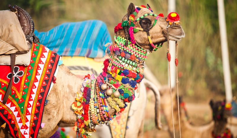 Cities in Rajasthan | Pushkar