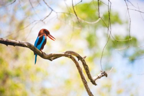 Wildlife Sanctuaries in Kerala