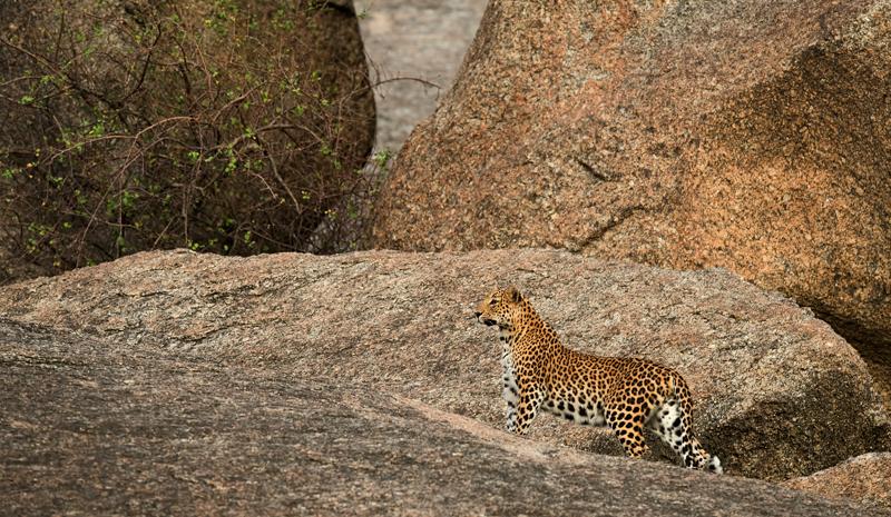 Explore Rajasthan on Foot | JAWAI