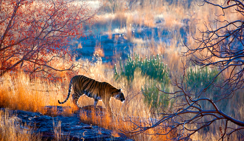 National Parks and Sanctuaries in India | Ranthambhore