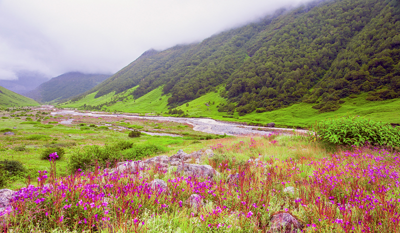 National Parks and Sanctuaries in India | Valley Of Flowers National Park
