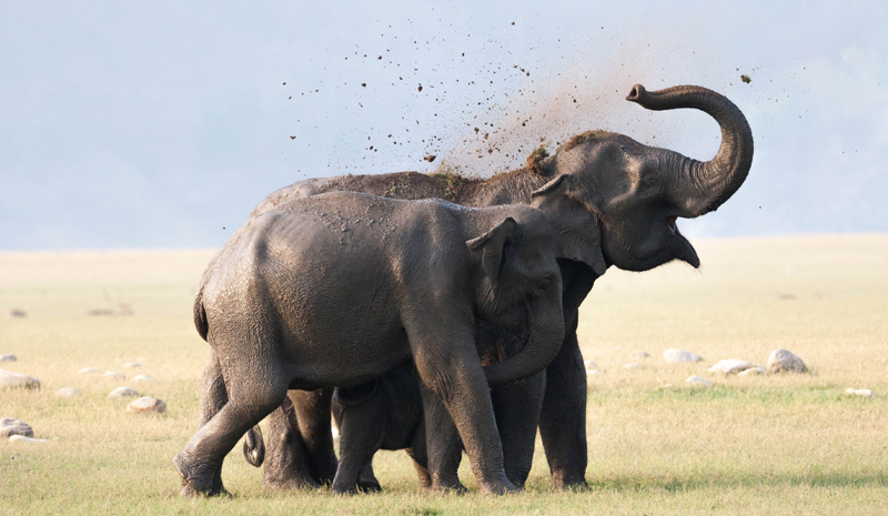 National Parks and Sanctuaries in India   Jim Corbett National Park