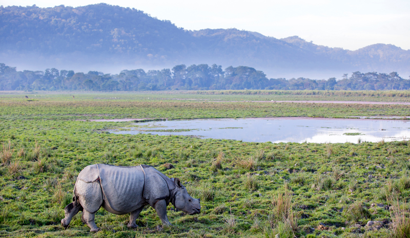 National Parks and Sanctuaries in India | Kaziranga National Park