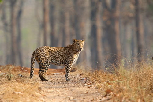 National Parks and Sanctuaries in India