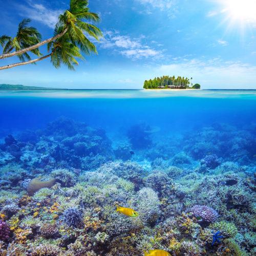 greaves_jumeirah_dhevanafushi_coral