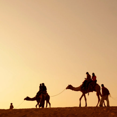 people riding camels at the camel camp hotel