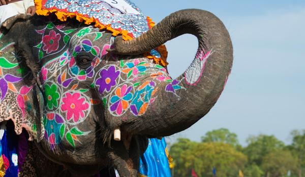 18-elephant