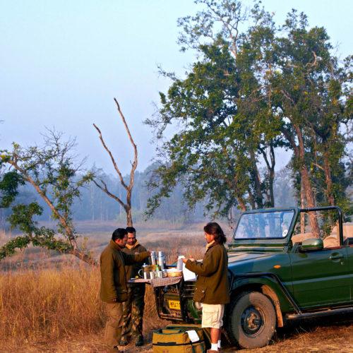 greaves_samode_safari_tea