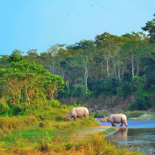 kasara-resort-rhinos