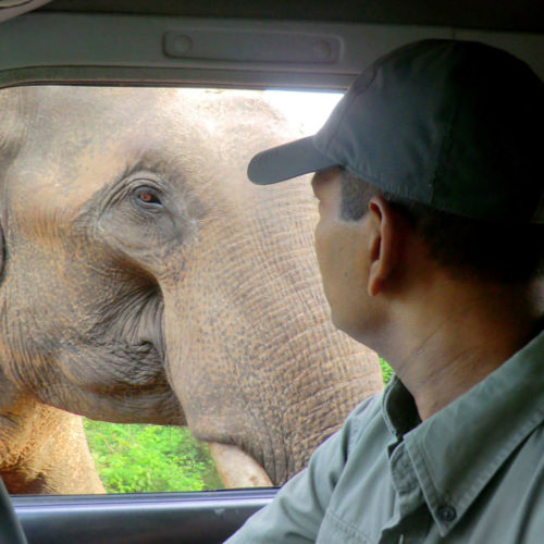 noel-rodrigos-leopard-safaris-elephant-through-jeep