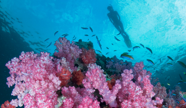 "Access to ""secret"" dive sites is one of many reasons to book with Silolona Sojourns © Martin Strmko/iStock"