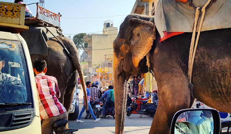 Elephant | Magic of India