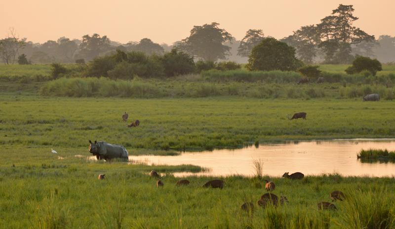 Tiger Reserves in India | Kaziranga