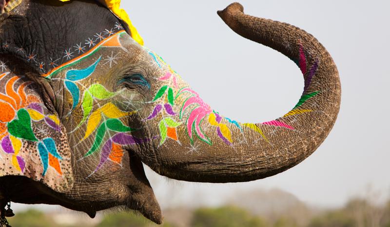 Where to Celebrate Holi | Elephant