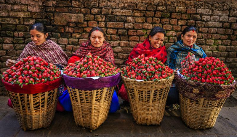 Nepal Guide | Pokhara strawberries