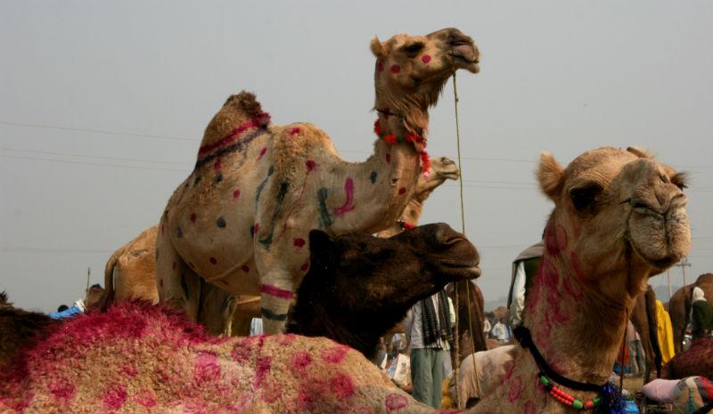 Chambal Safari Lodge | Animal Fair Bateshwar