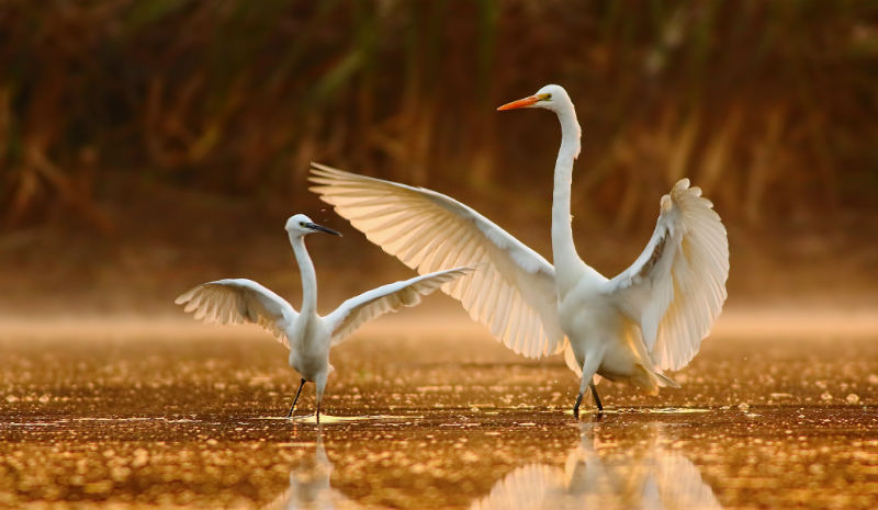Things to do in Hyderabad | Dancing birds