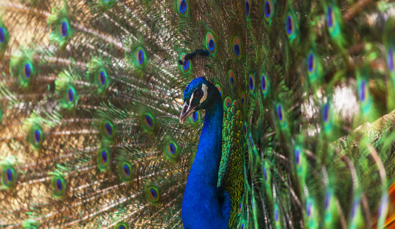 India with Children | Peacock