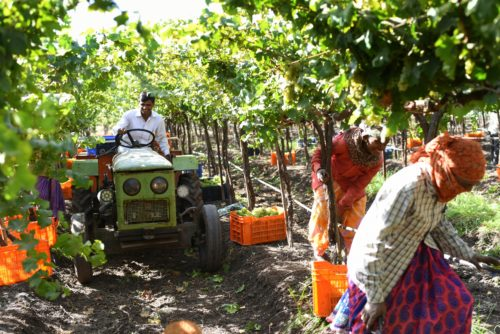 Indian wines | Sula