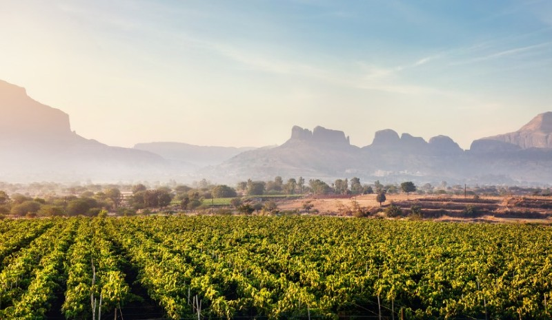 Indian Wines | Chandon