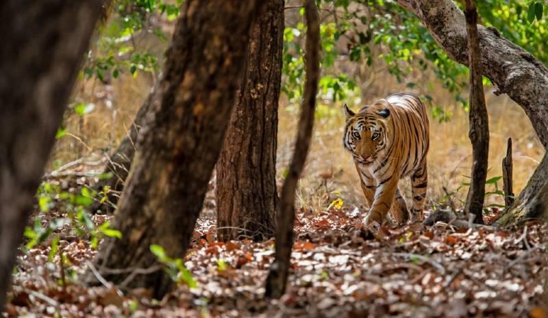 Nepal Honeymoon Tiger Safari
