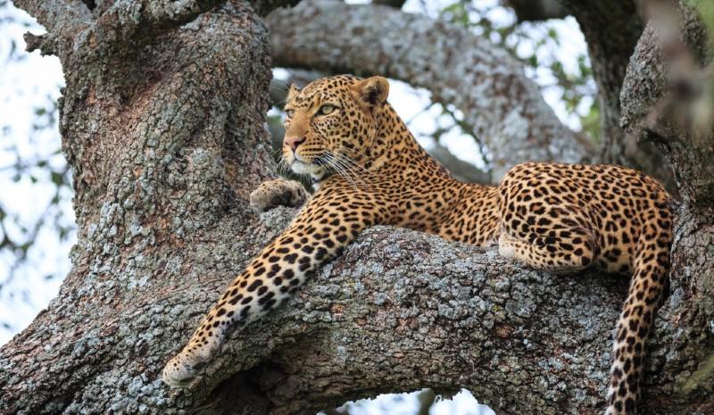 13 Indian Experiences | leopard