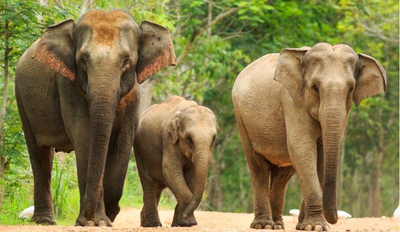 22 Indian Experiences | Fmaily of elephants